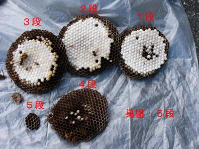 ハチ写真集55-4
