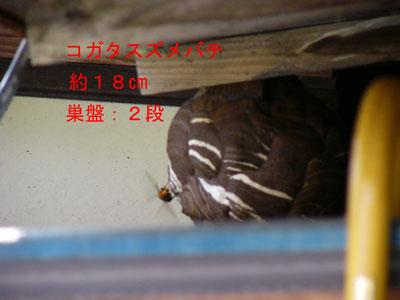 ハチ写真集56-2