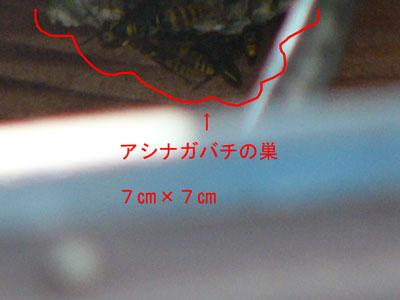 ハチ写真集56-3