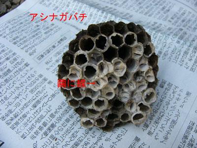 ハチ写真集56-5