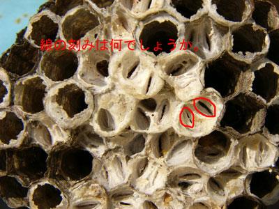 ハチ写真集56-6