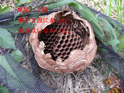 1.ハチ駆除事例39-3