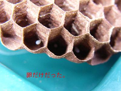 1.ハチ駆除事例39-5