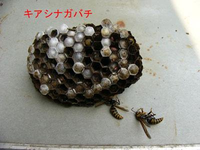 1.ハチ駆除事例40-4