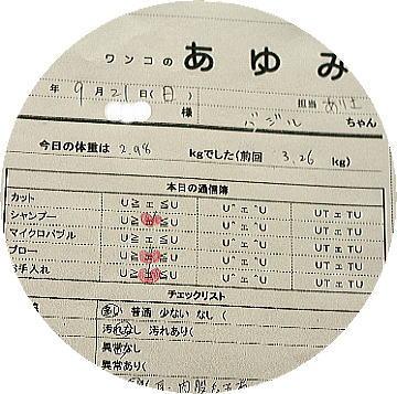 odaiba29.jpg