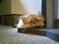 猫の居る休憩所「299」