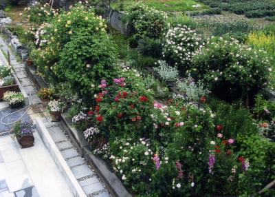 garden1001