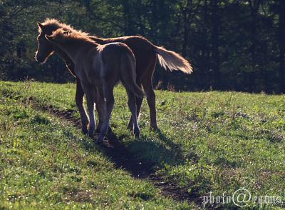 horse910