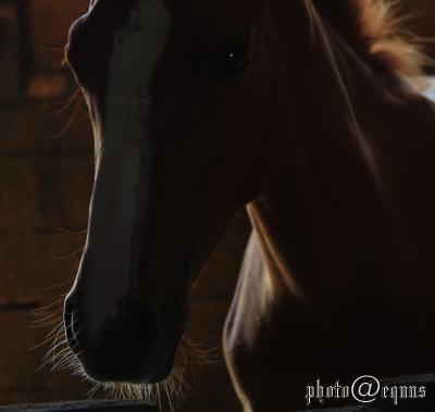 horse915