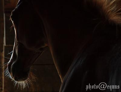horse916