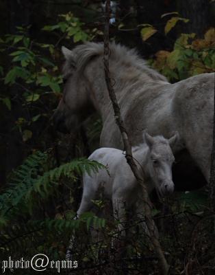 horse918