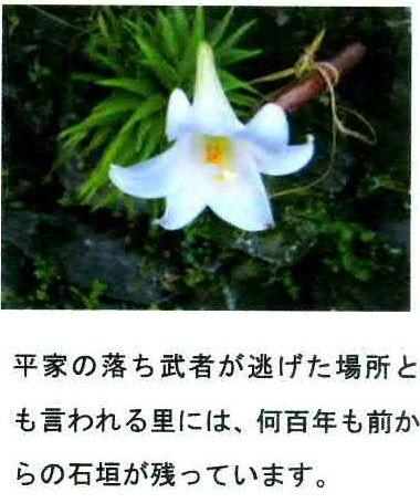 清見メッセージ2-1