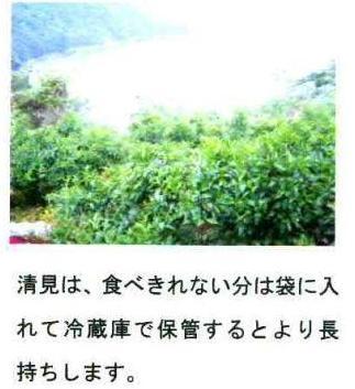 コピー ~ 清見メッセージ1-2