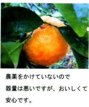 コピー ~ 清見メッセージ1-1