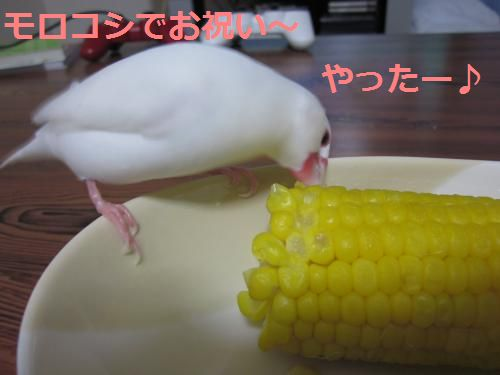 お祝いだー☆