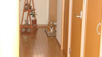 玄関でいじけ気味・・