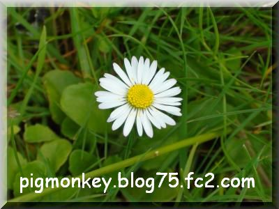 DSC02739_convert_20090509105050.jpg