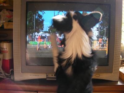 テレビ掘るのやめてくれる?