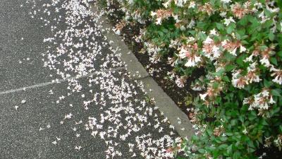犬が木の根もとに頭を突っ込むから花が落ちてしまうのよ
