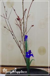 flower_20090207-4