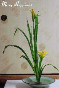 flower_20090606-3