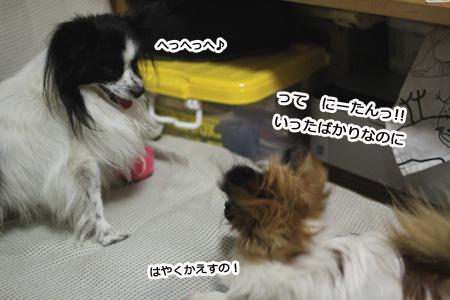 IMG_p9746.jpg
