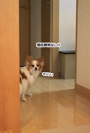 IMG_po9449.jpg