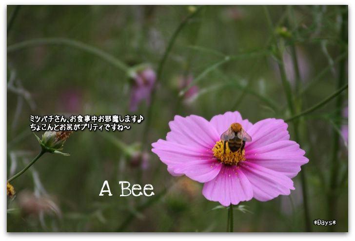 ミツバチ後ろ