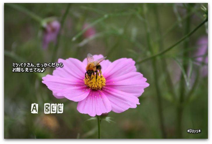 ミツバチ前