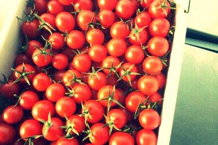 110207 tomato,