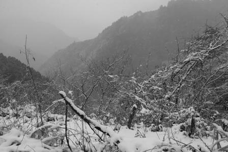 110212 snow.
