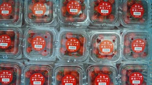 110321 清流トマト。