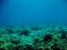 タオ島 ダイビング コーラル