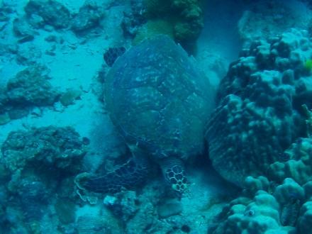 タオ島 ダイビング カメ