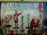 人体解剖図鑑