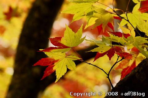 kuroishi08n_eip.jpg