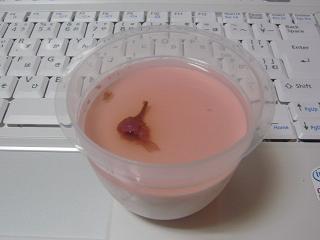 ほのかな桜プリン