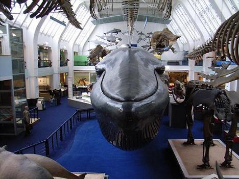 09自然史博物館4