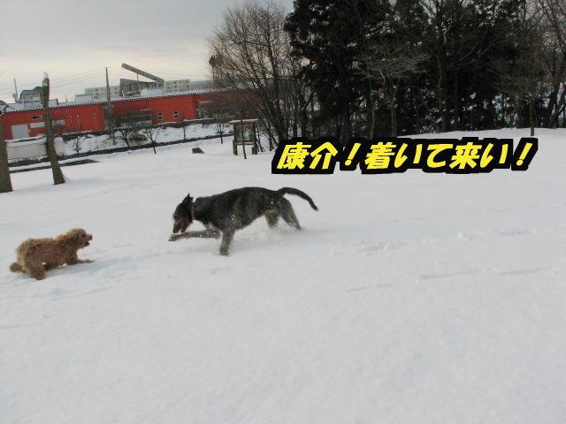 09.1.26べべ&康介