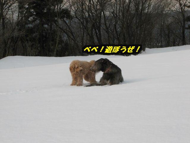 09.1.26康介、べべ