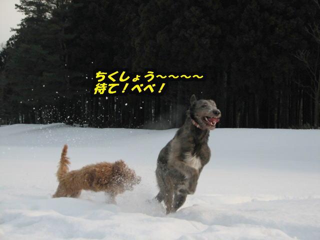 09.1.26べべ&康介5