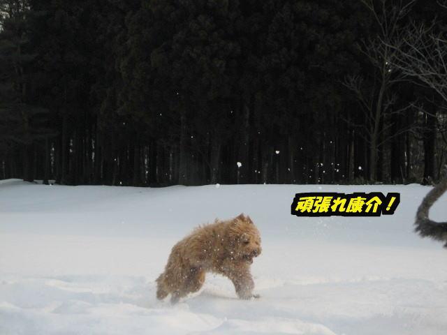 09.1.26べべ&康介6