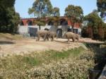 動物園・象