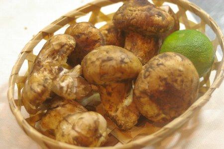 トルコ産の松茸