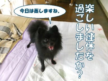 20110719_1.jpg