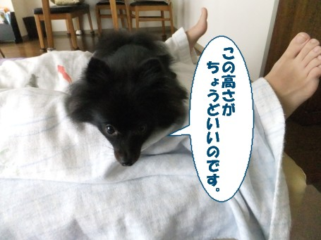 20110722_2.jpg