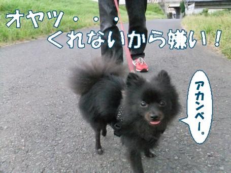 20110724_1.jpg