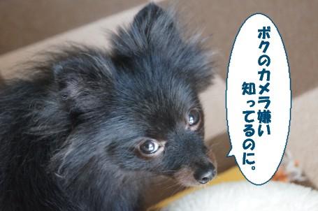 20110725_2.jpg