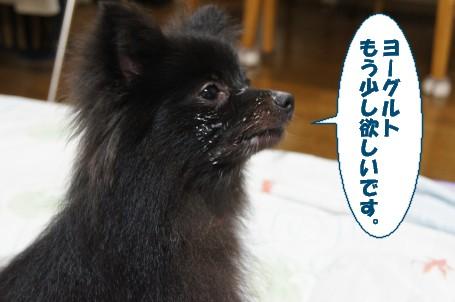 20110726_2.jpg