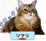 猫ブログ・ソマリへ